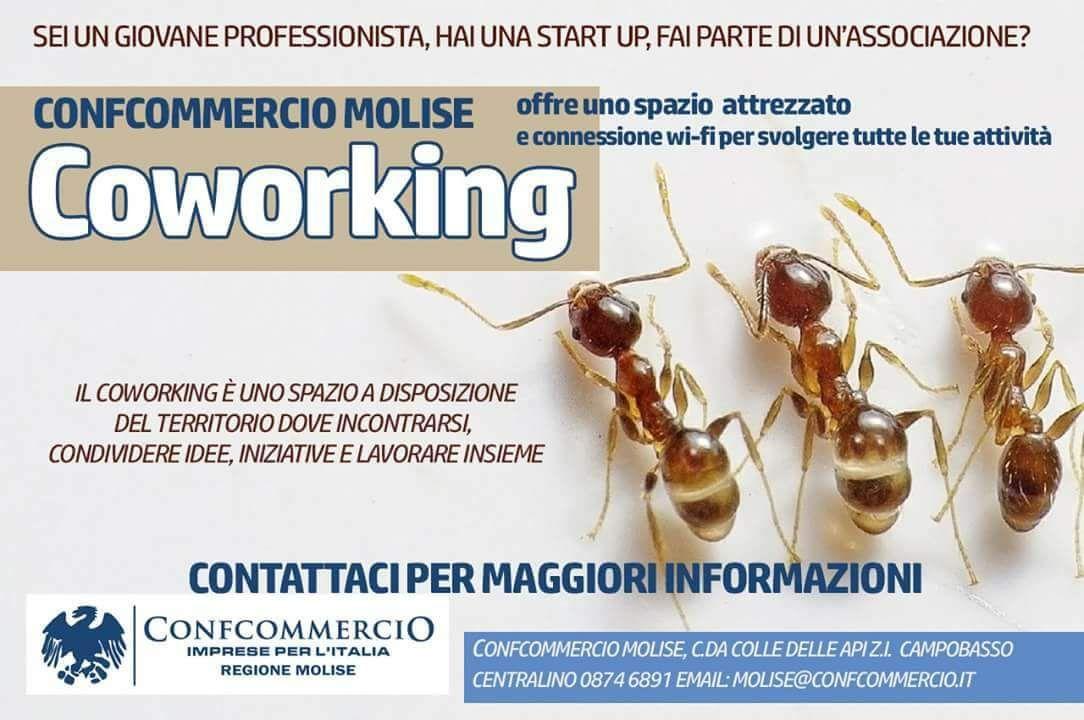 Servizio Coworking
